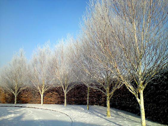 formality-garden-design-5